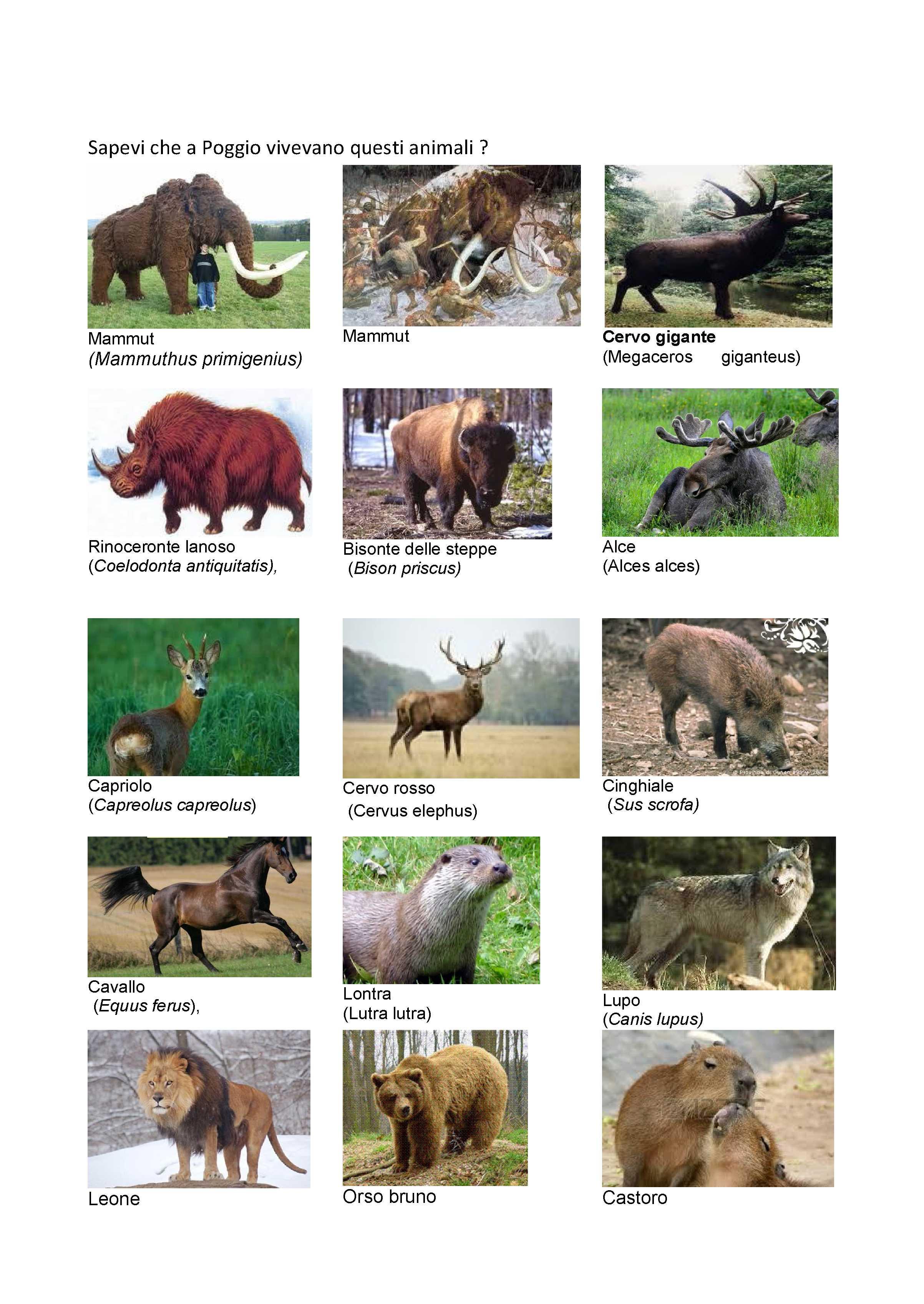 Sapevi che Poggio vivevano questi animali_Pagina_1